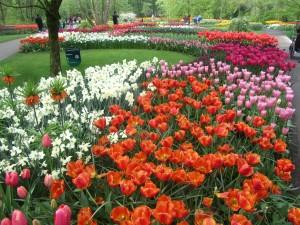 Tulpenblüte 2014, Keukenhof, Holland